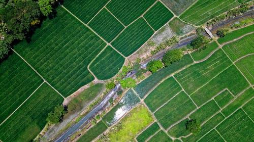 استفاده از حشره کش کشاورزی